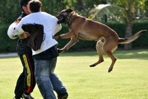 Dog attacking human
